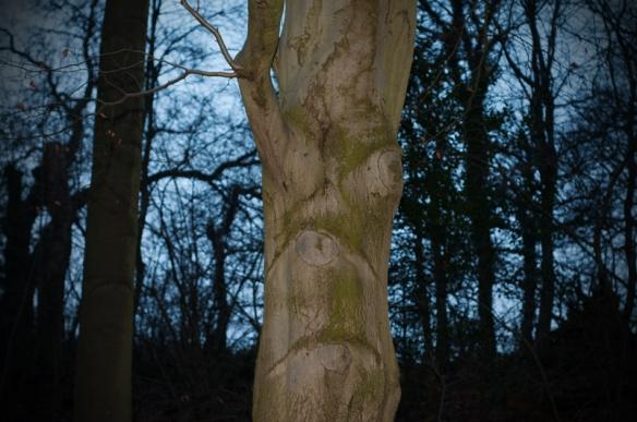 treeshaveears-02-small